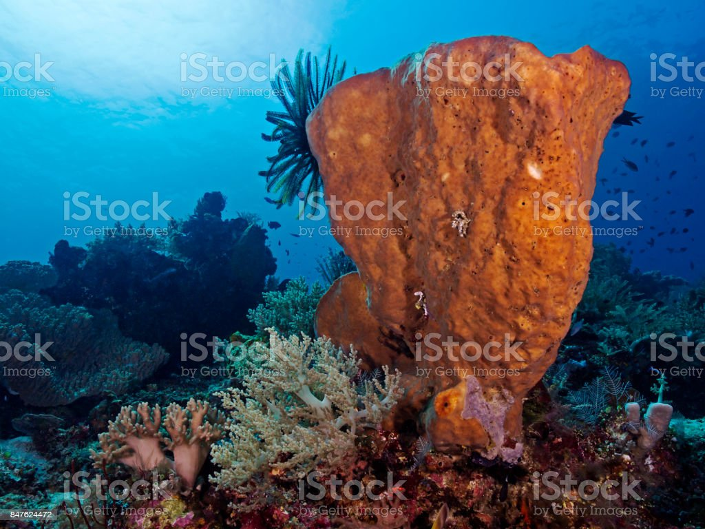 Tropical seascape, Tropische Unterwasser-Landschaft stock photo