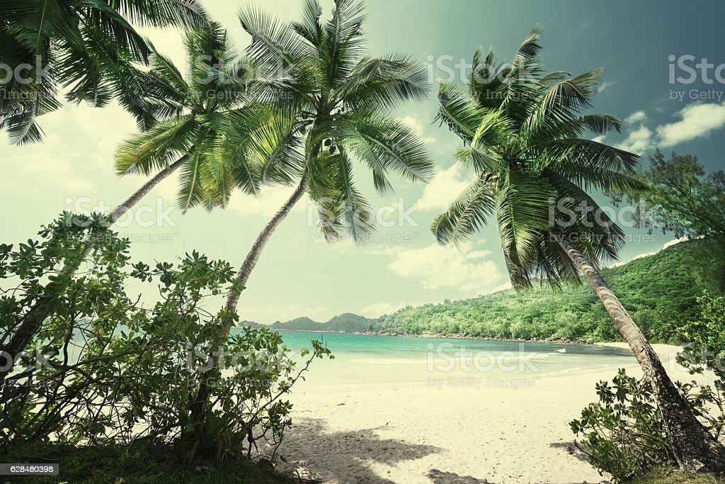 tropical Seychelles beach stock photo