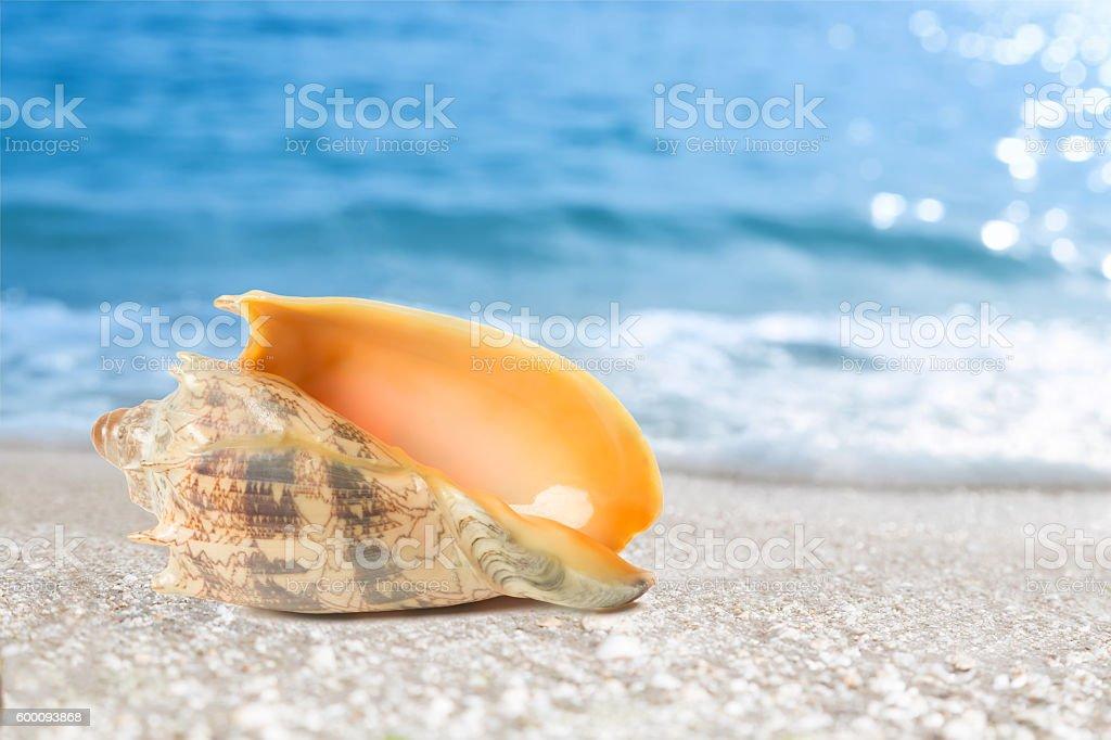 Tropische schale am Strand Lizenzfreies stock-foto