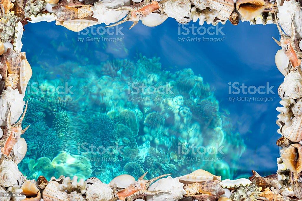Tropische Shell-Jacken und das blau Riff Lizenzfreies stock-foto