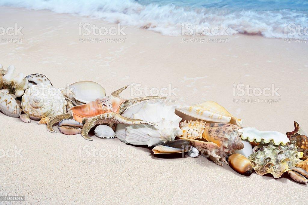 Tropische Muscheln am Strand Lizenzfreies stock-foto