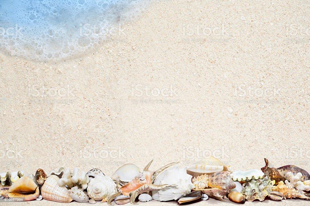 Tropische Muscheln auf einem Sandstrand Lizenzfreies stock-foto