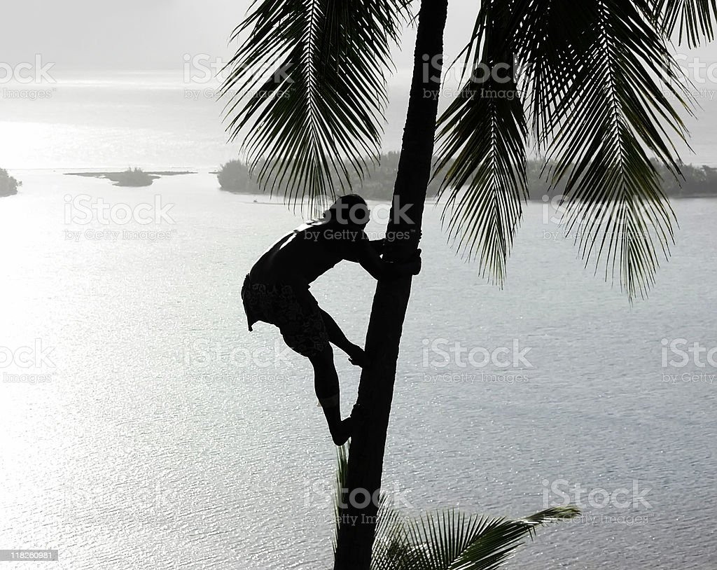 Tropical Silhouette royalty-free stock photo