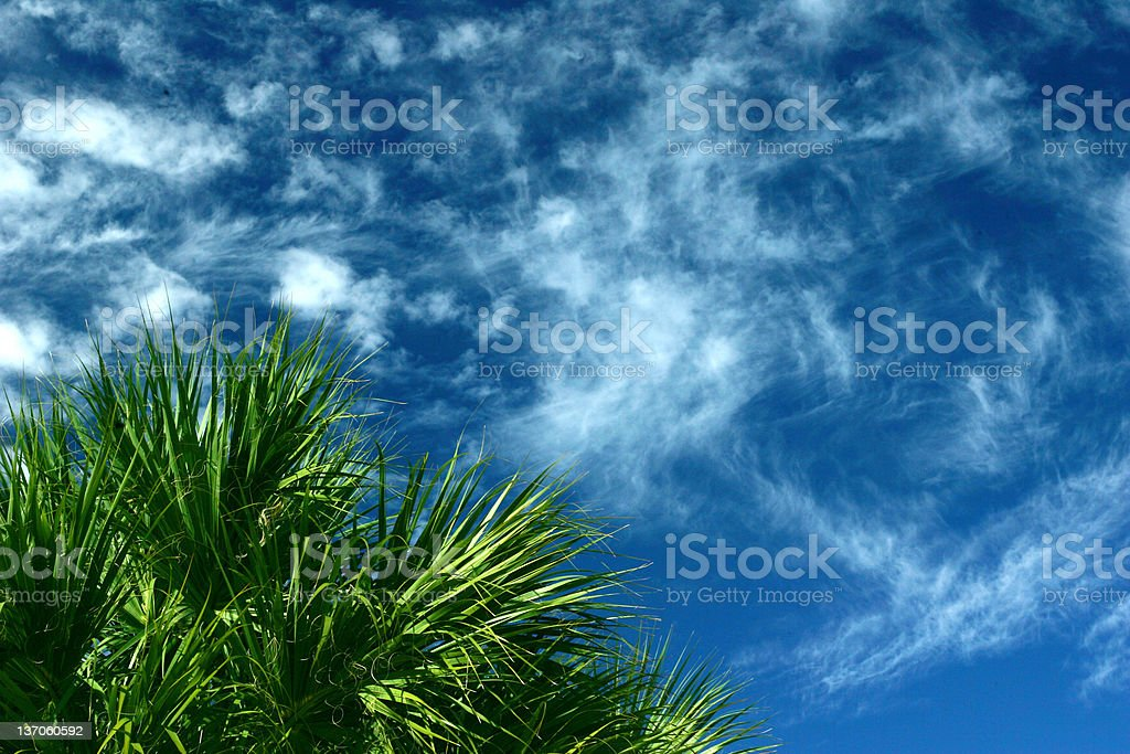 Tropical Sky & Palm royalty-free stock photo