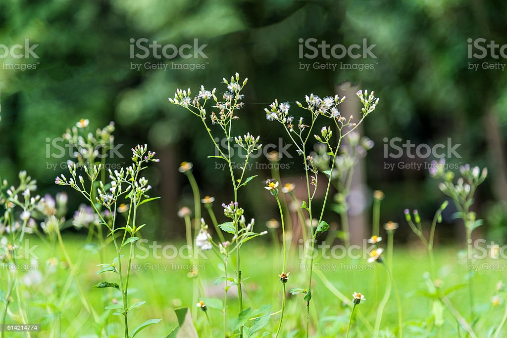 Tropical small grass flowers in closeup stock photo