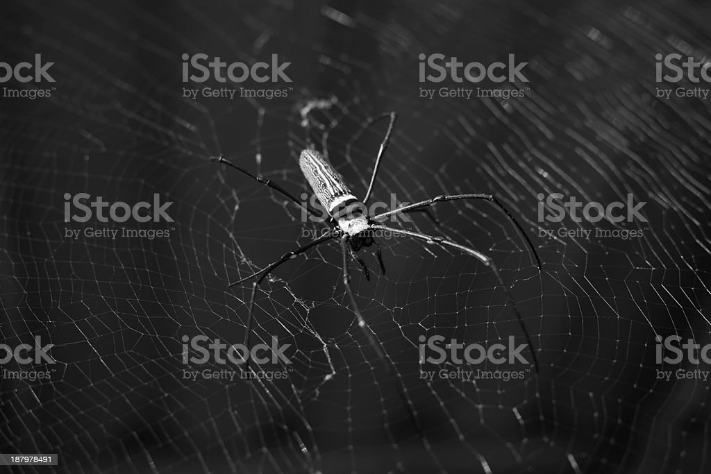 Tropical spider in web stock photo