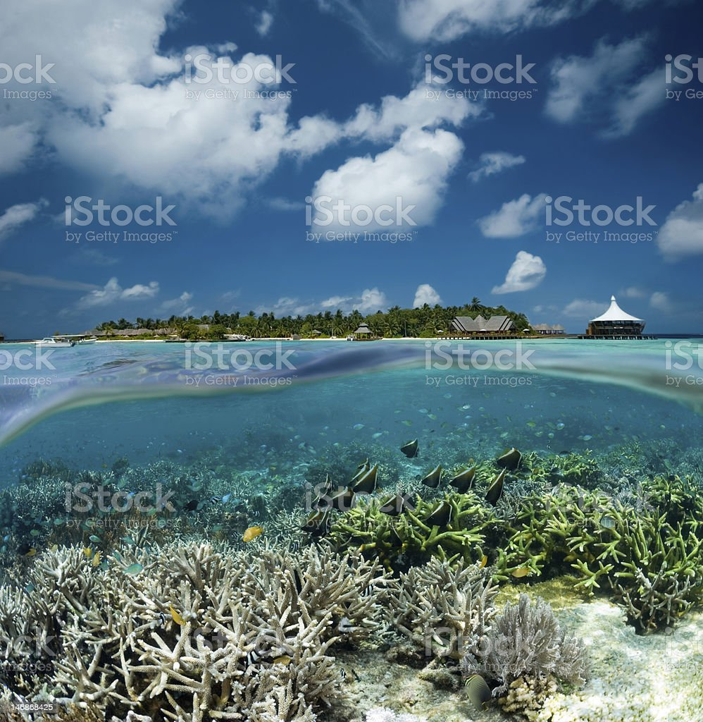 Tropical split stock photo