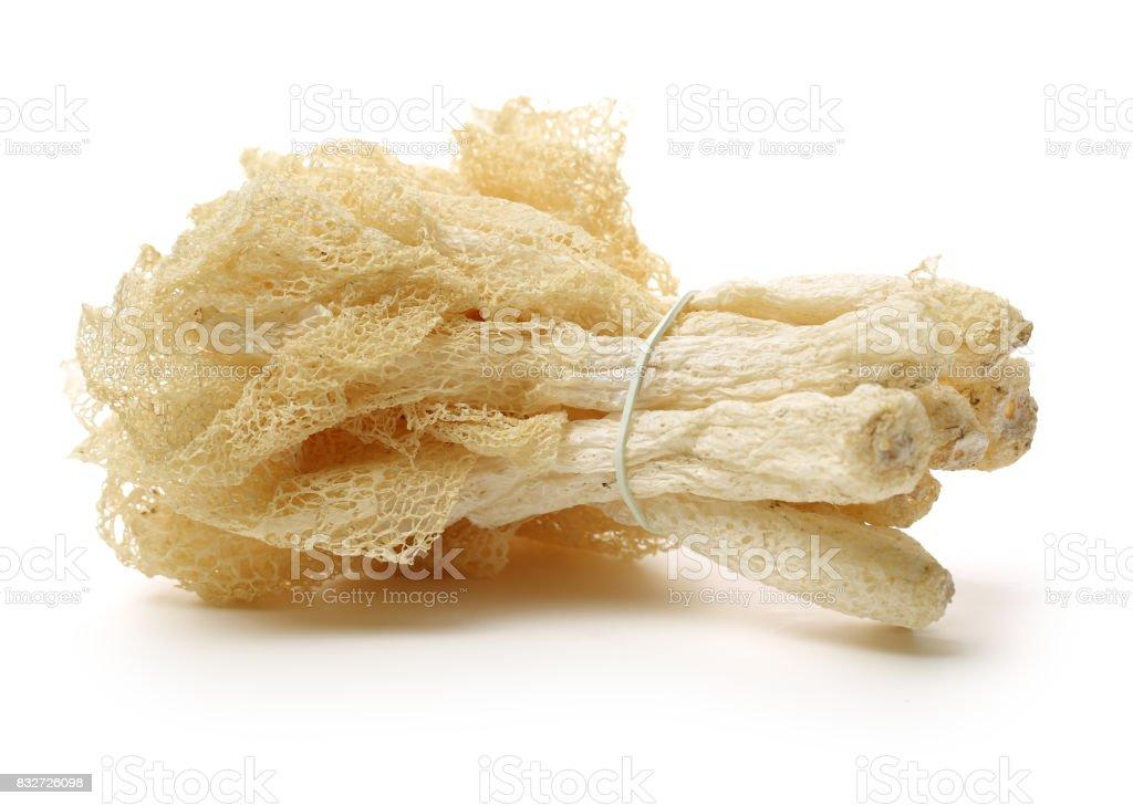 Tropical Stinkhorn mushroom, Phallus indusiatus Isolated on White Background stock photo