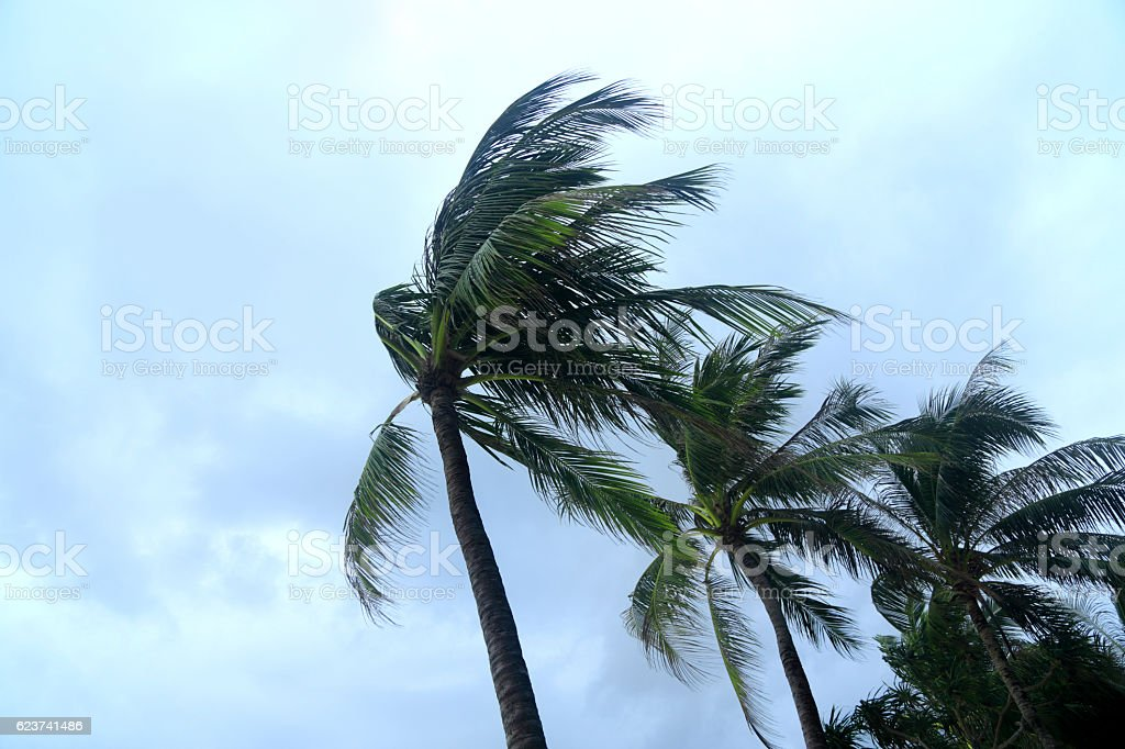 tropical storm and palm trees stock photo