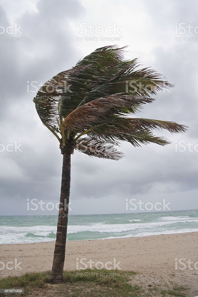 Tropical Storm on the beach stock photo