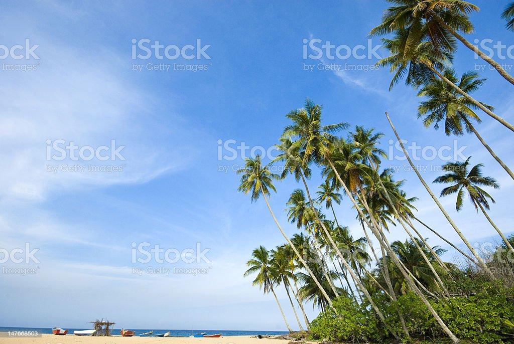 Tropical sunny beach stock photo