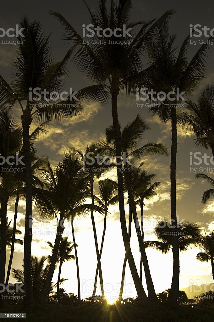 Tropical Sunrise royalty-free stock photo