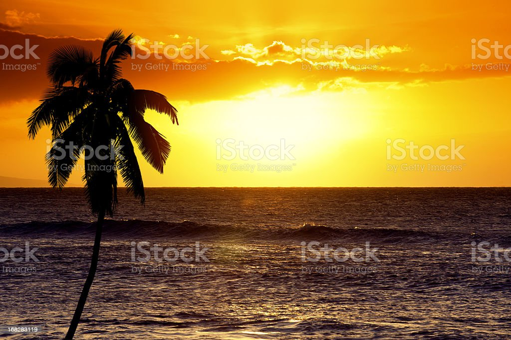 Tropical Sunset and Palm Tree stock photo
