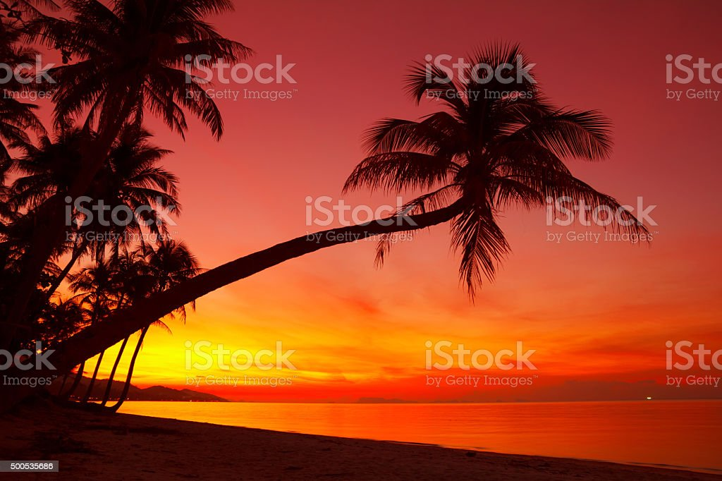 Tropical sunset beach with palm tree stock photo
