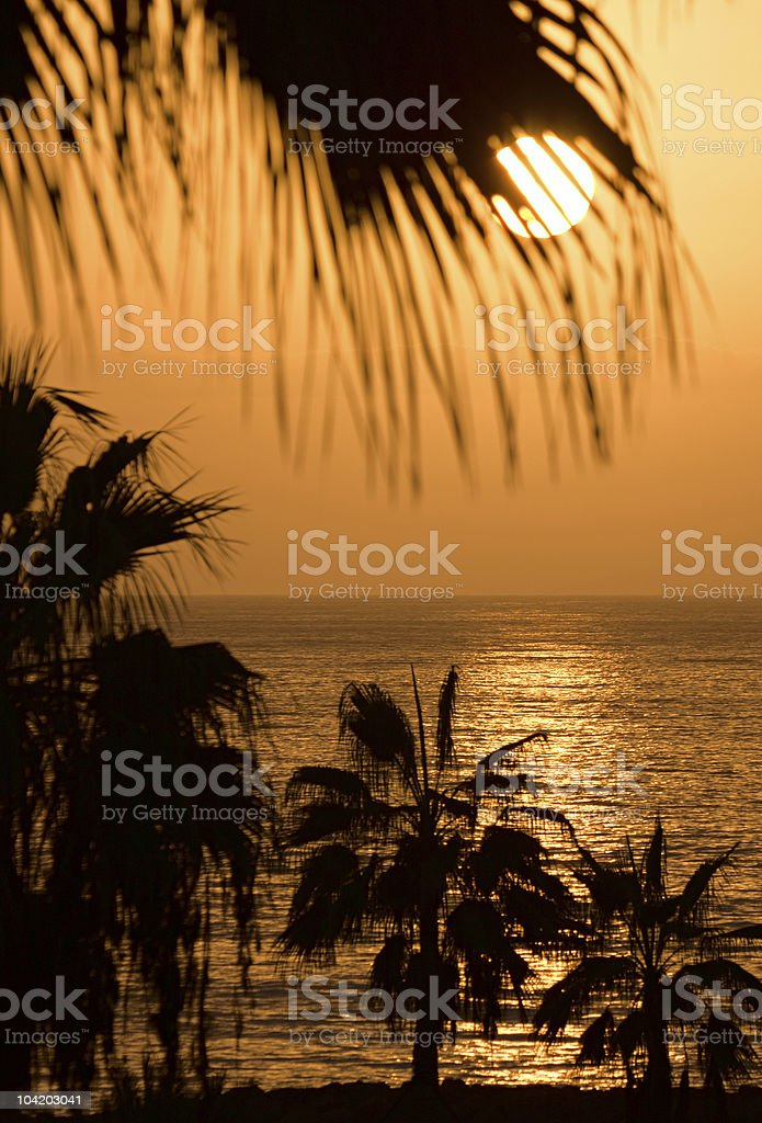 Tropical sunset, Tenerife stock photo