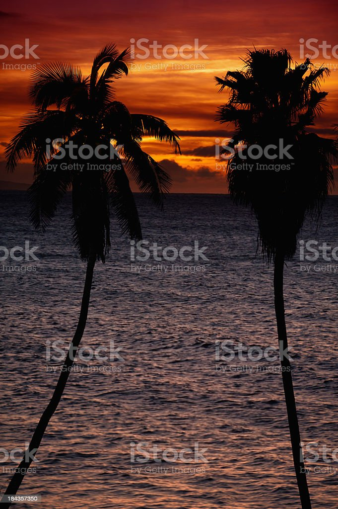 Tropical Sunset With Palm Tree Silhouettes stock photo