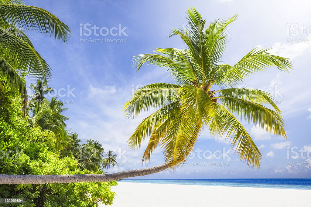 Tropical Sunshine Island royalty-free stock photo