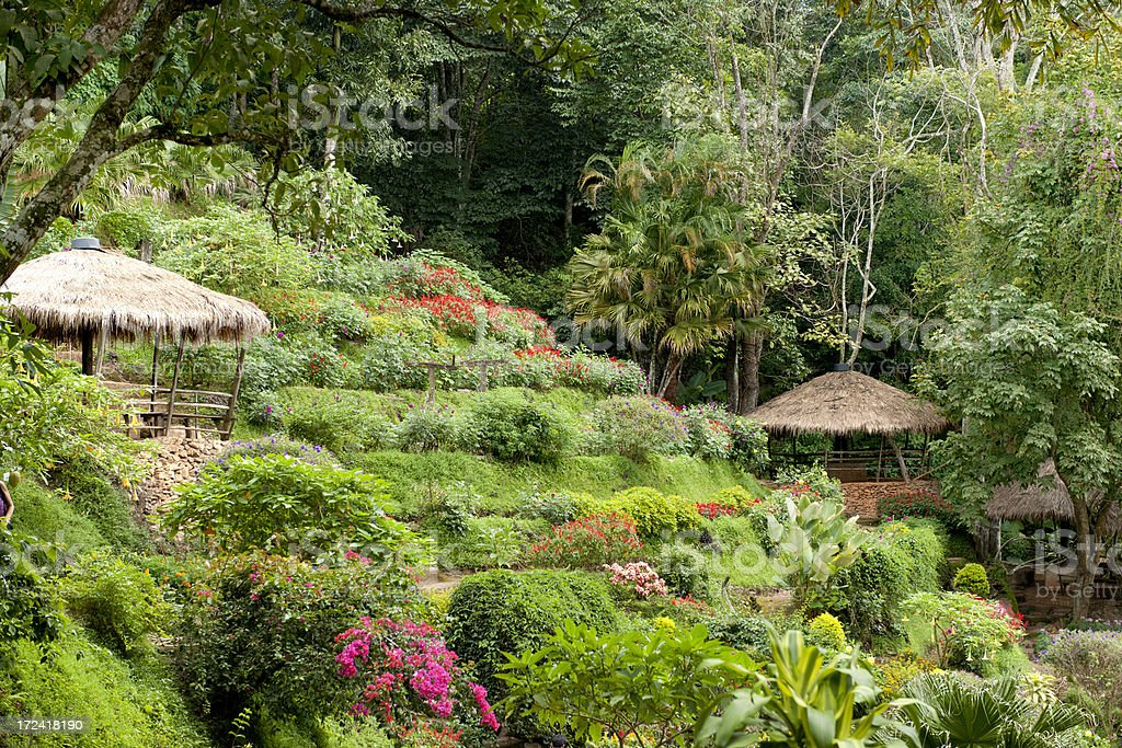 tropical terraced garden in northern Thailand royalty-free stock photo