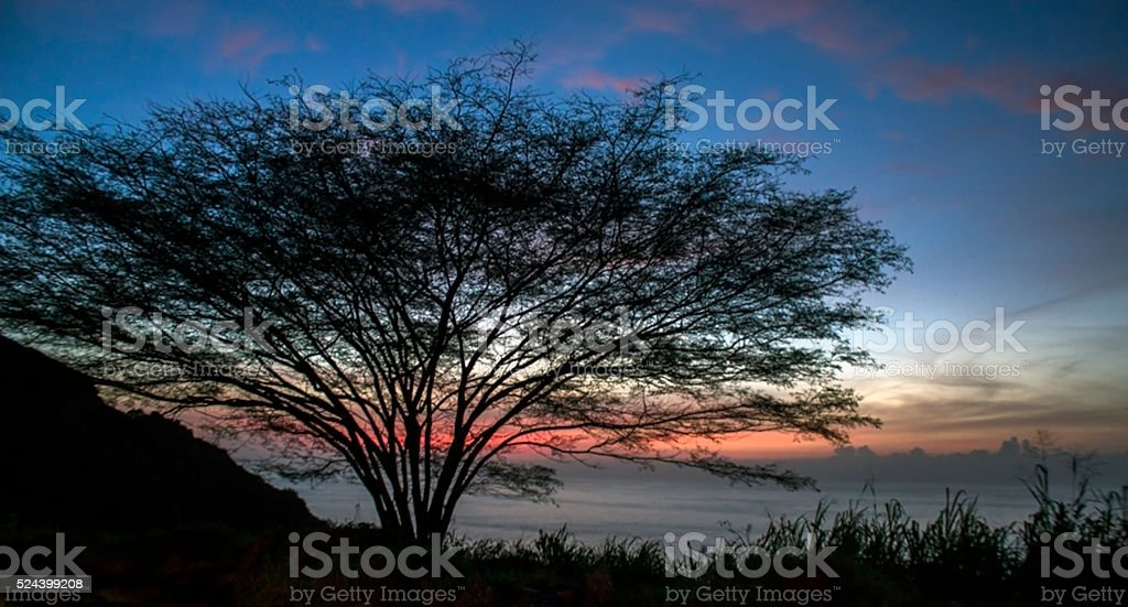 Tropical tree, background of a sunset stock photo
