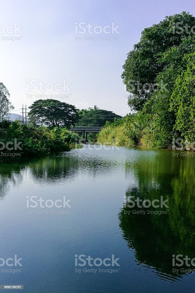 Tropical tree forest near the peaceful river stock photo