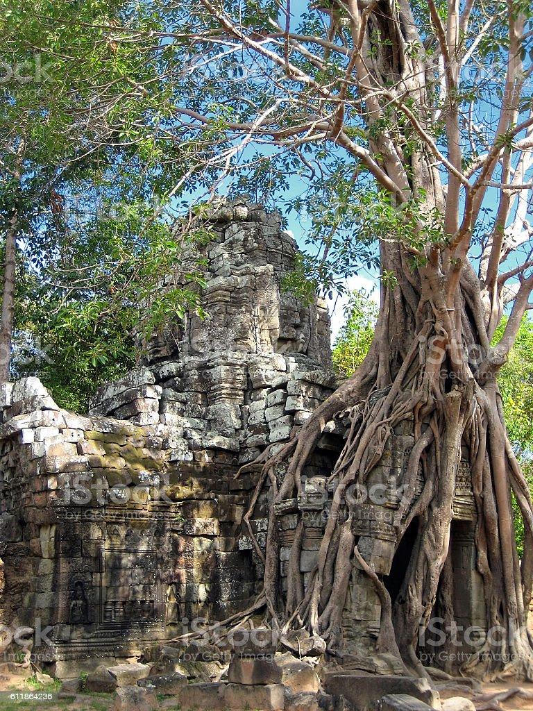 Tropical tree on Ta Som, Angkor, Siem Reap,Cambodia stock photo