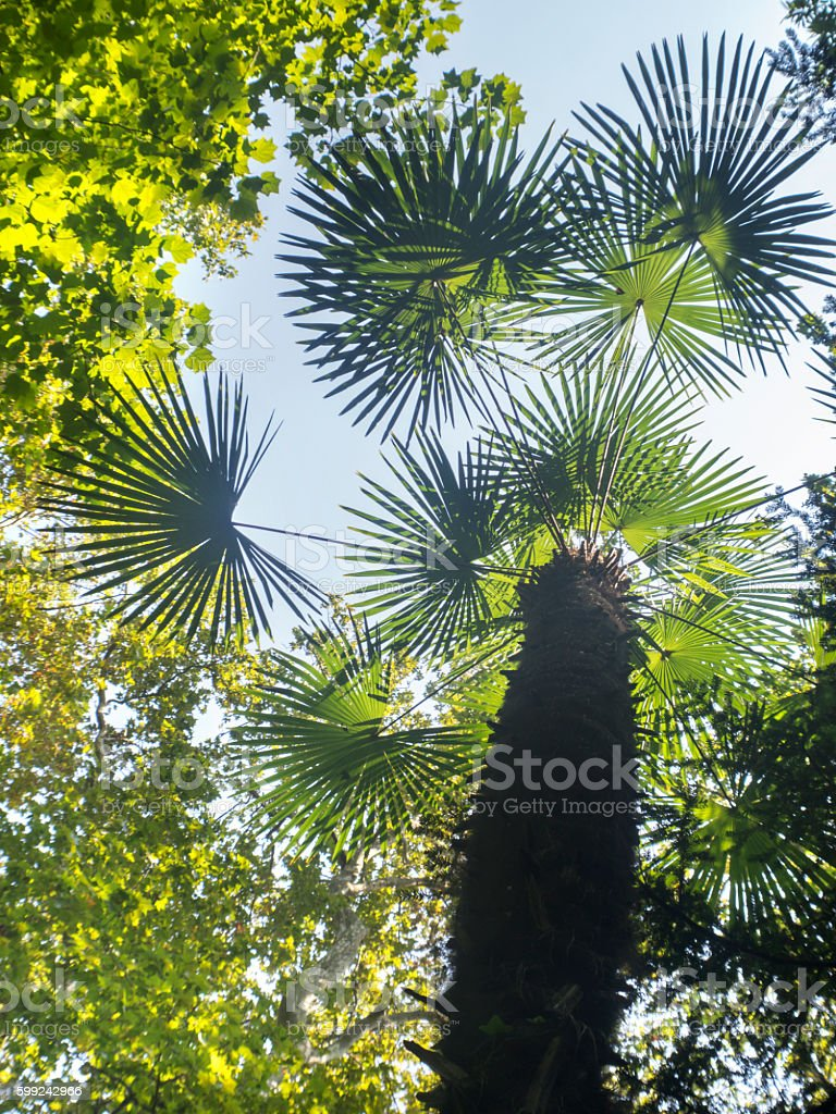 tropical tree wiew from below stock photo