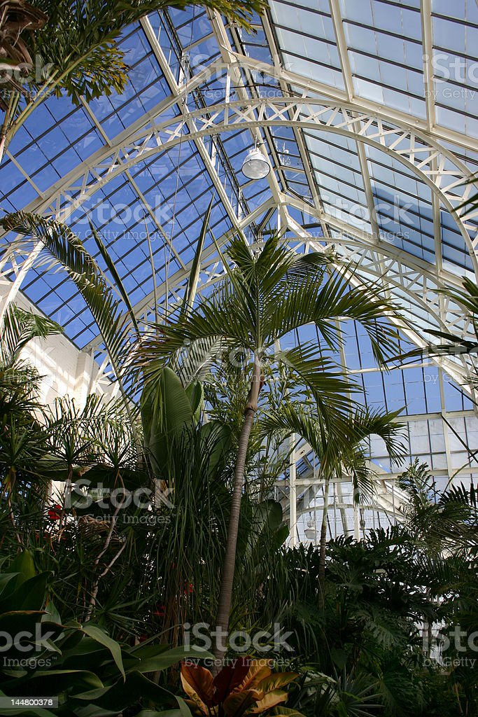 Tropical Trees in Conservatory royalty-free stock photo