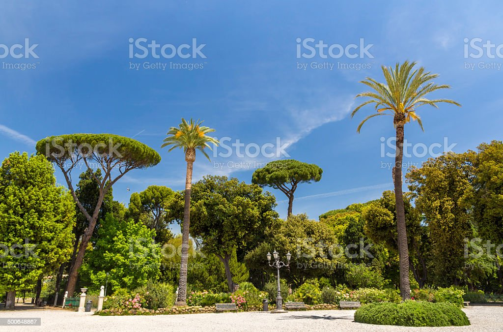Tropical trees on Piazzale Napoleone I in Rome, Italy stock photo