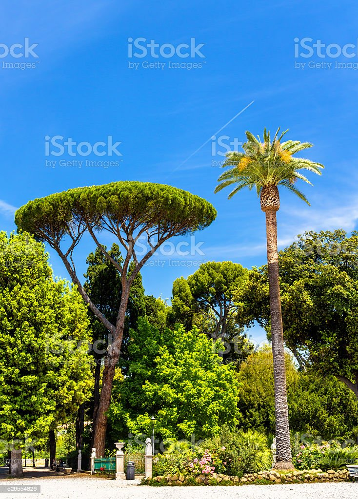 Tropical trees on Piazzale Napoleone I in Rome stock photo