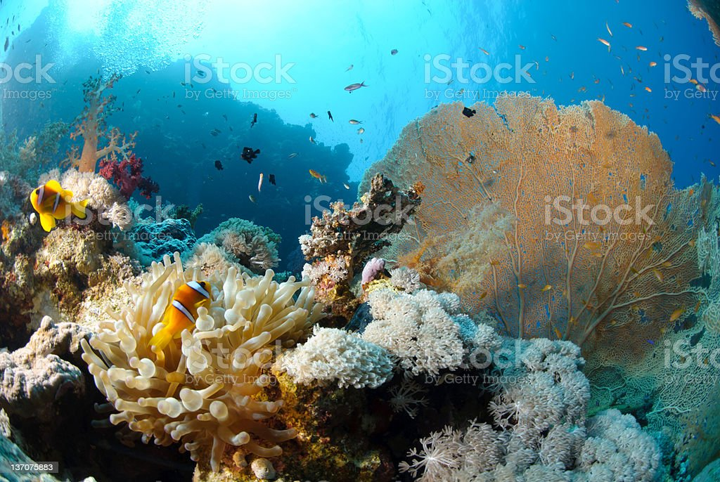 Tropical underwater destination scenic royalty-free stock photo
