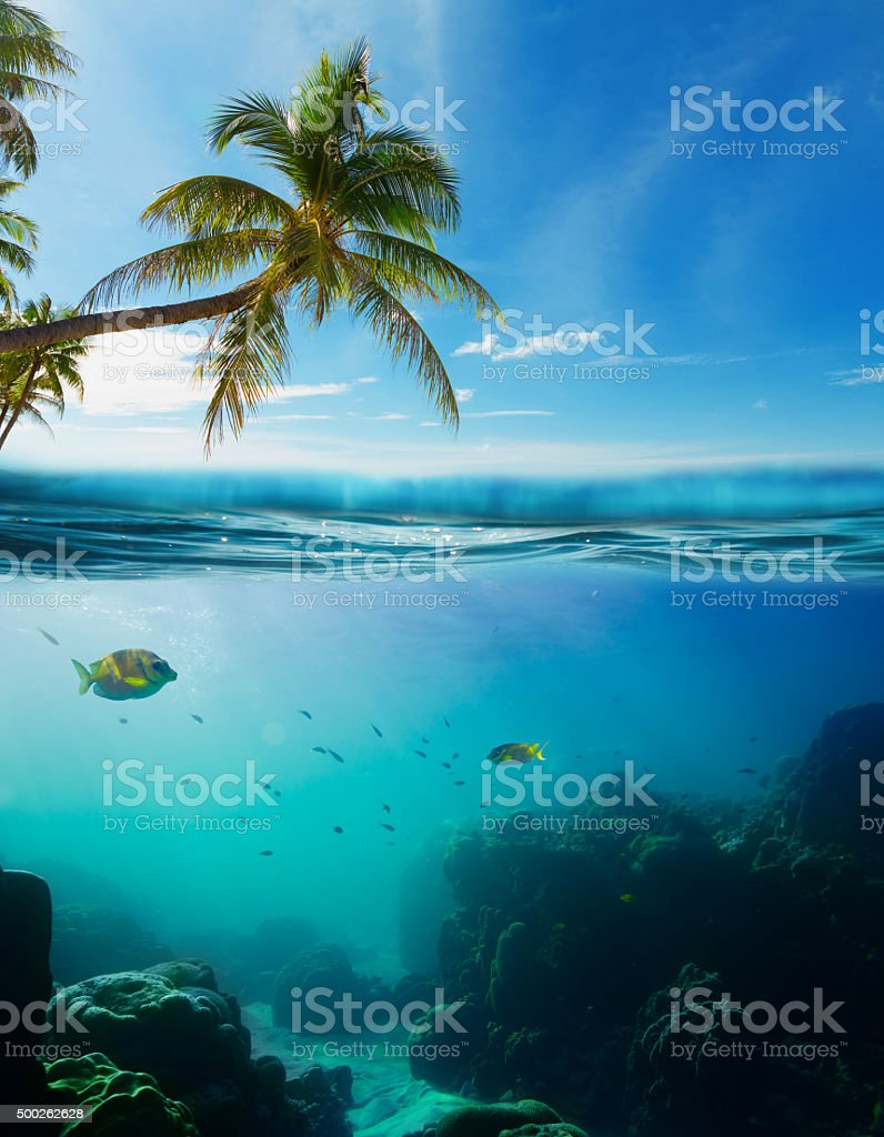 Tropical underwater shot splitted with surface stock photo