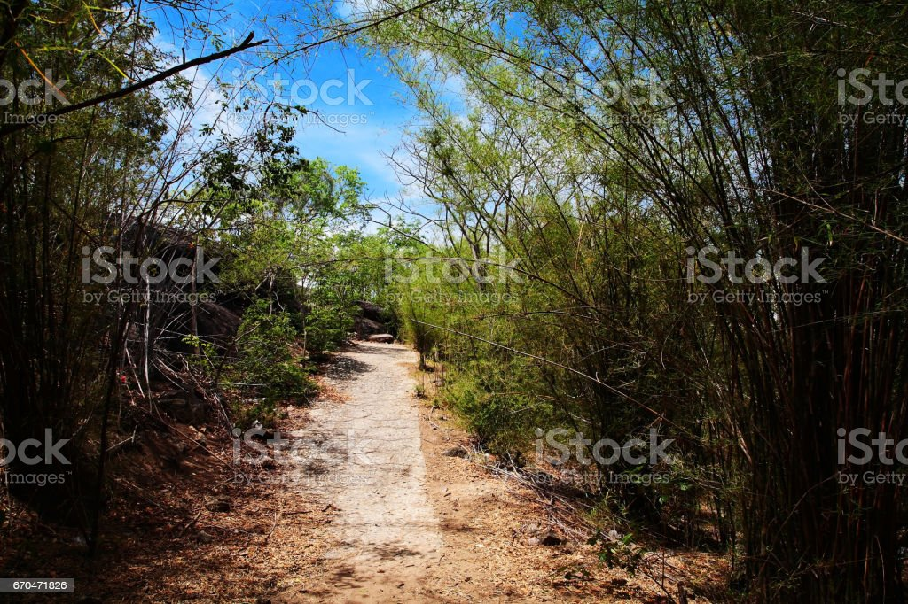 Tropical uphill route with Bamboo grove against blue sky stock photo