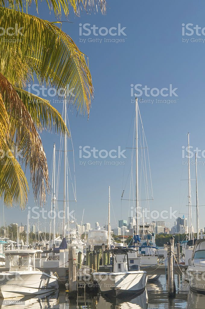 Tropical urban lifestyle at a glance royalty-free stock photo