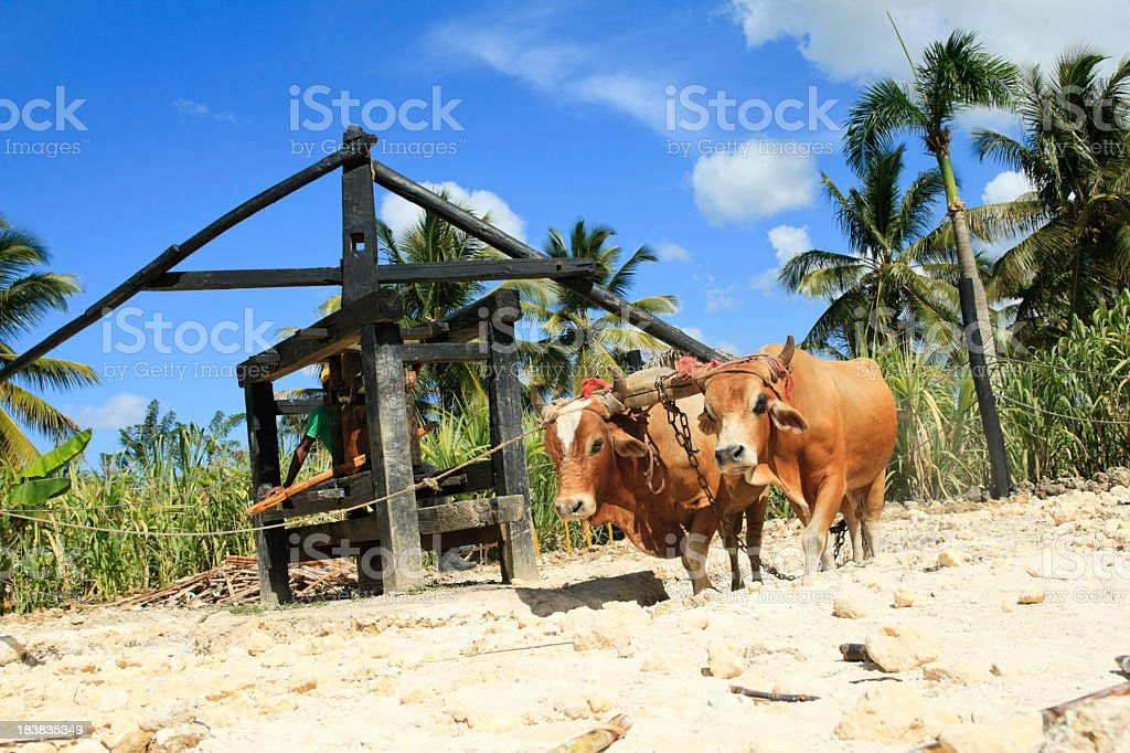 Tropical Vacancy - Cane Sugar stock photo