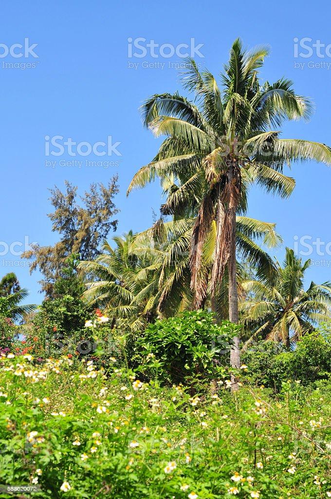 Tropical vegetation on Vavau in Kingdom of Tonga stock photo