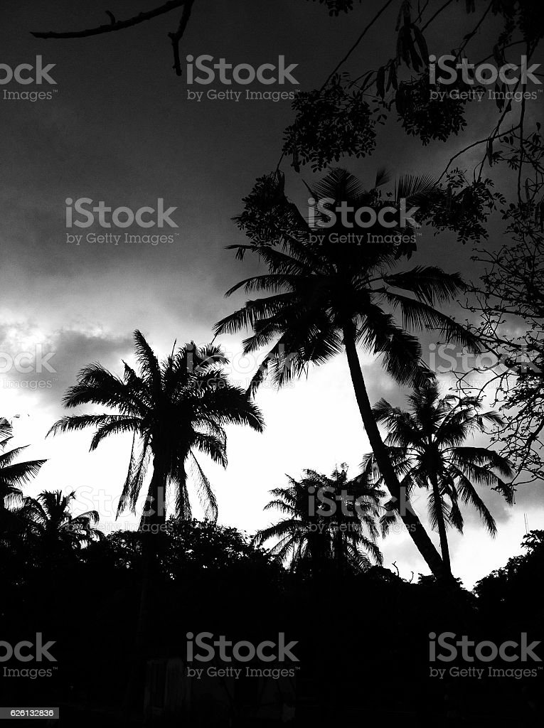 Tropical Vibes stock photo