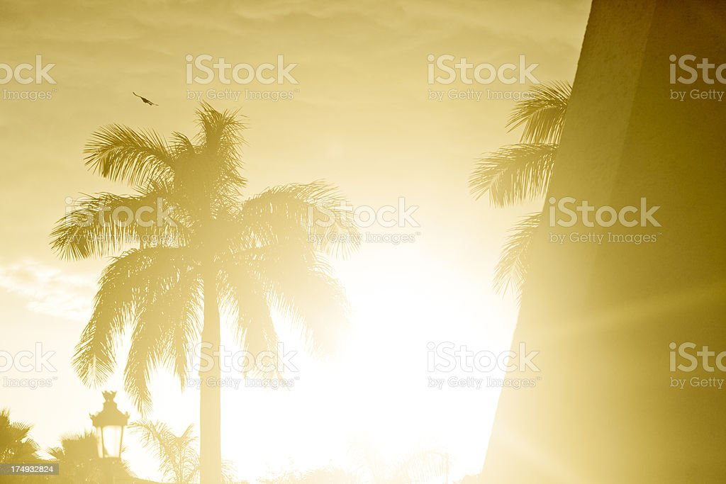 Tropical Weather royalty-free stock photo