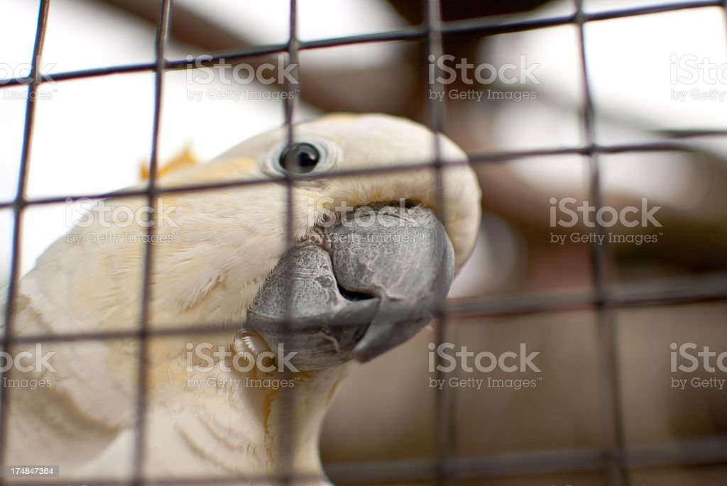 Tropical White Parrot Cockatoo stock photo