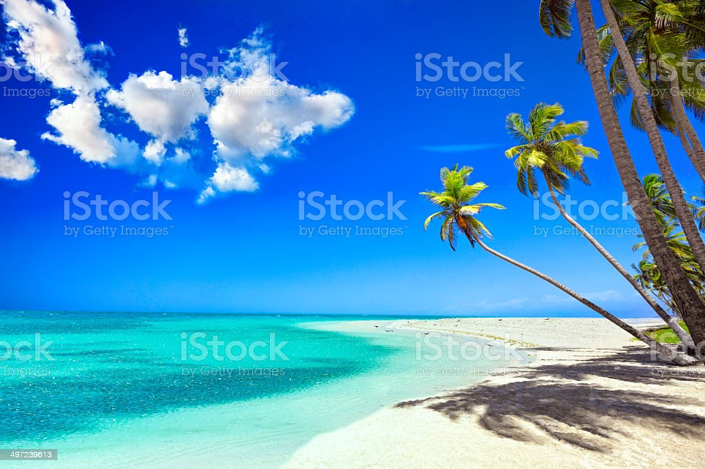 Tropical white sand beach in Caribbean island with coconut trees stock photo
