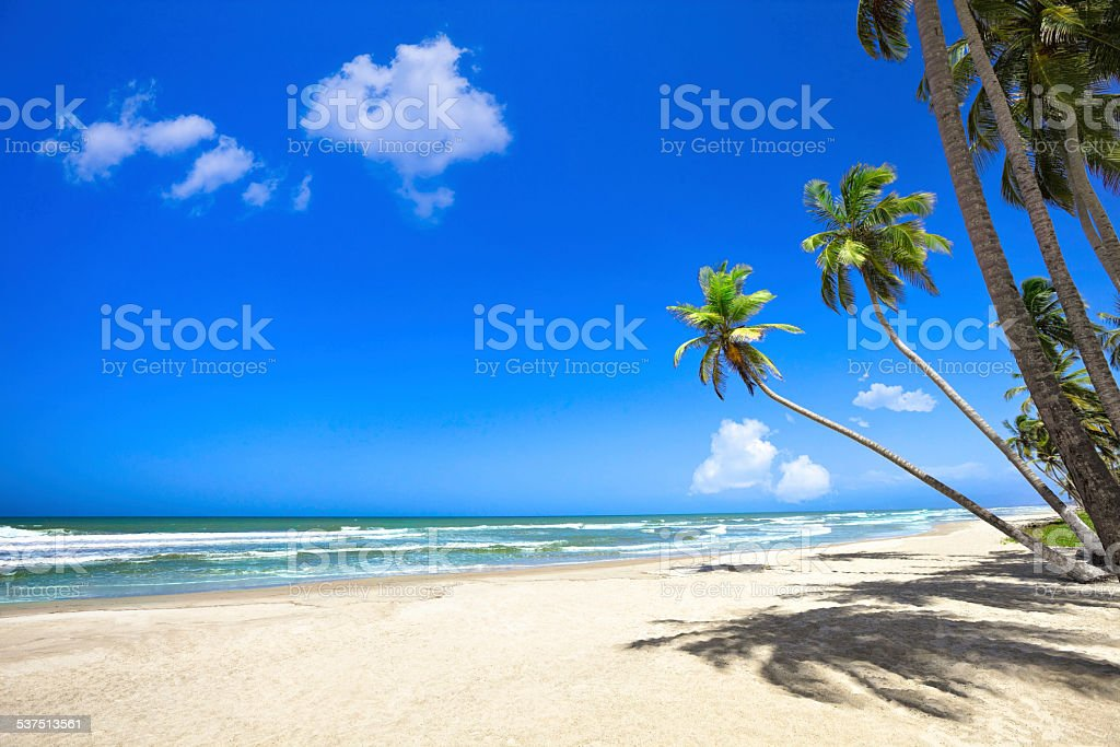 Tropical white sand beach with coconut trees in the Caribbean stock photo
