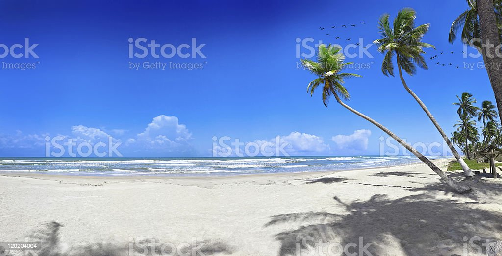 Tropical white sand virgin beach royalty-free stock photo