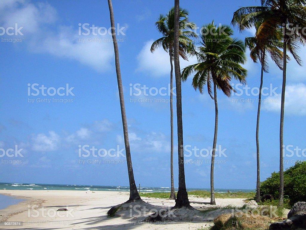 tropical white wild sand beach stock photo