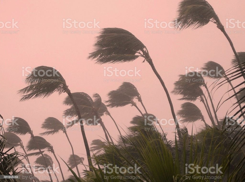 tropical wind stock photo