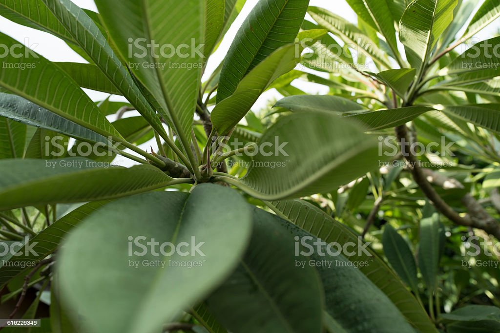 Tropical zone of the plant stock photo