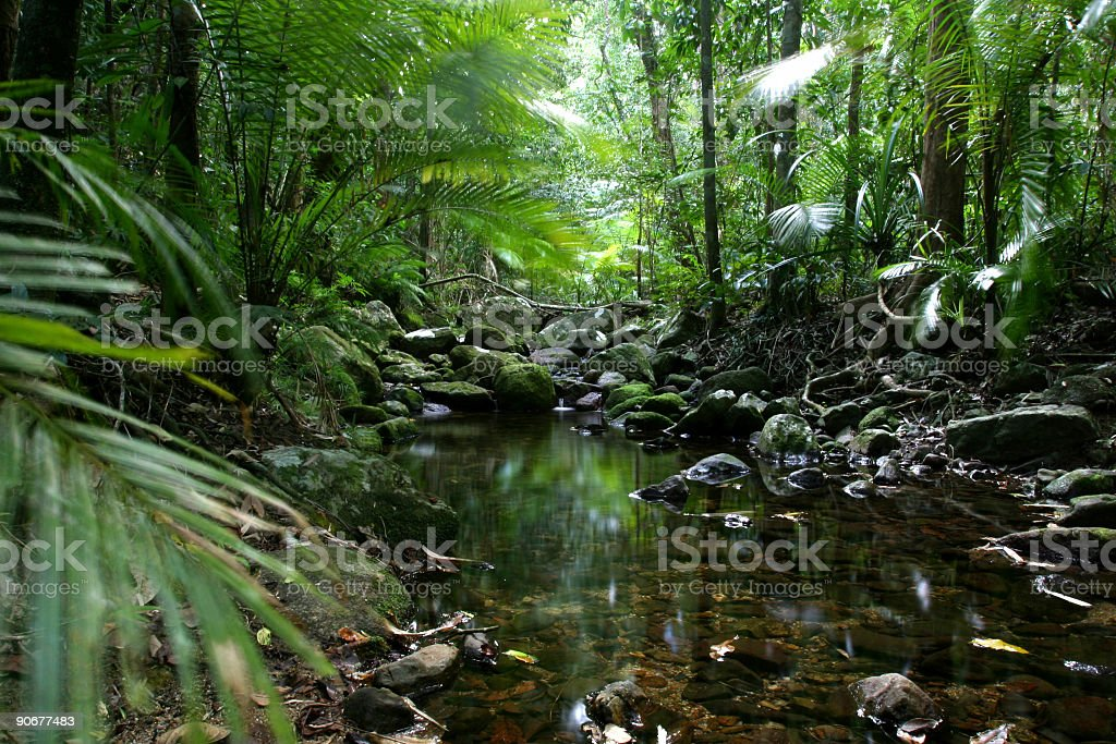 Tropical_Rain_Forest royalty-free stock photo