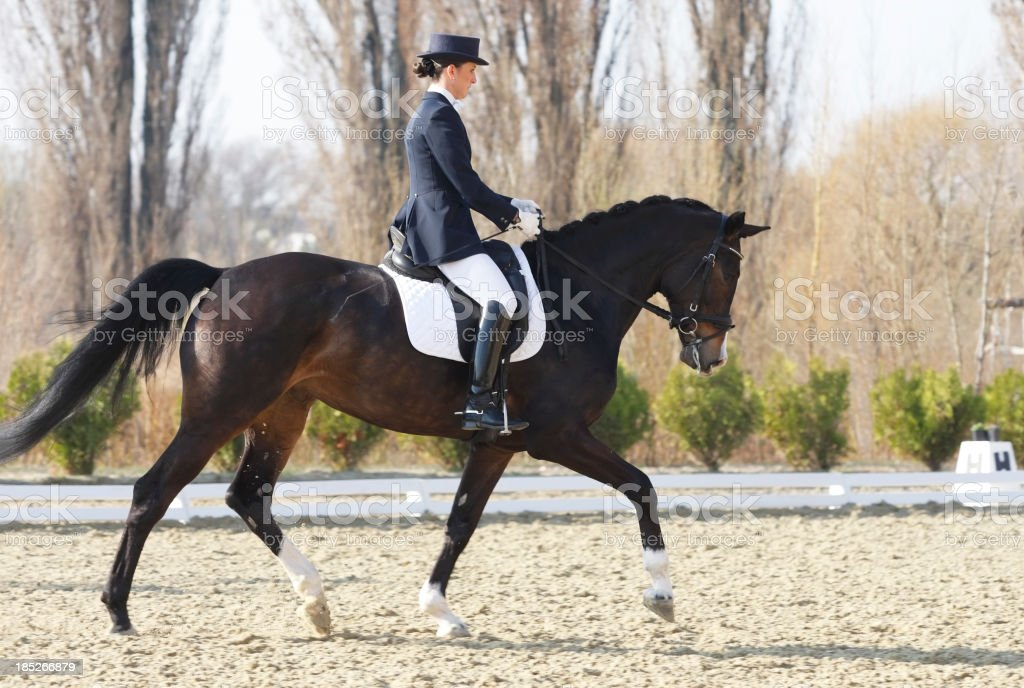 Trot on a dressage competition stock photo