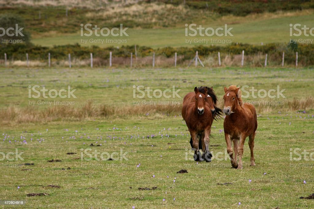 Trotting horses stock photo