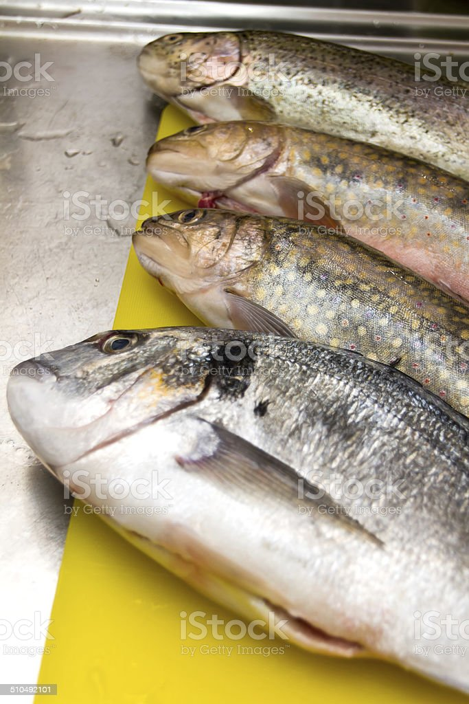 Forelle, Bachsaibling und Dorade roh stock photo