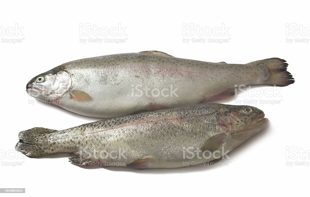 trout catch royalty-free stock photo