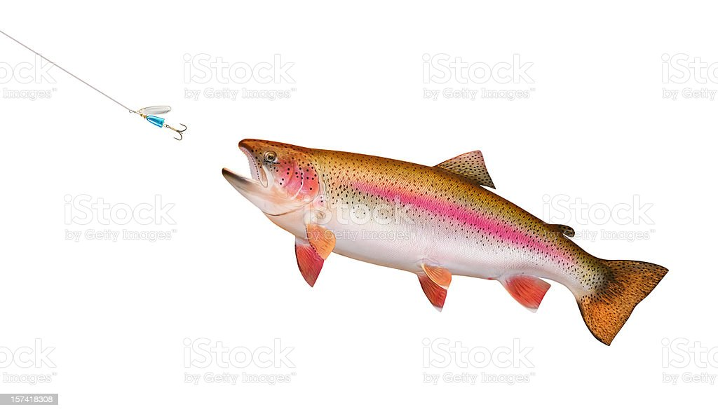 Trout Chasing Lure stock photo